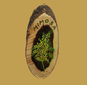 t mimosa 300x295 - MIMOSA
